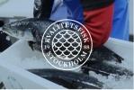 Kvalitetsfisk i Stockholm AB logotyp